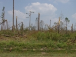 Hurricane Katrina damage to a forest